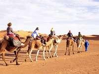 rulota de deșert