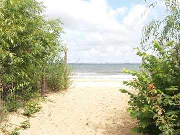 chemin vers une plage sauvage - chemin vers une plage sauvage sur la mer Baltique