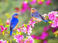 vogels ..