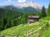 ferme alpine