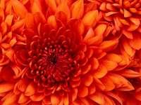 very pretty flowers - many pretty plants