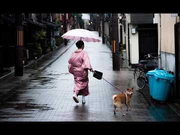 Japonia i jej ulice - Piękna Japonia, kobieta spacerująca z psem