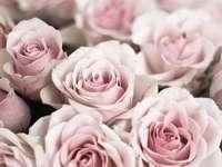 pink roses in tilt shift lens - Close-up of a bouquet of pink roses.