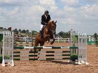 competições de cavalos