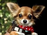 kleine hond....