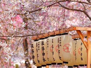 flores de cerejeira - Primavera no Japão, flor de cerejeira