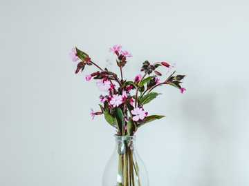 pink flowers in clear glass vase - I've never taken photos of flowers, but lockdown has got me enjoying being in nature. I've