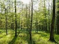Gyönyörű erdő ...