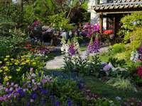 színes világ - álmok kertje ------------