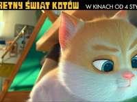 тайният свят на котките