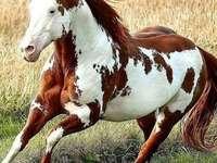 schoonheid en kracht - een mooi paard