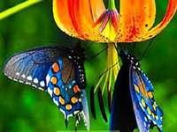 Fjärilar. - Fjärilar av världen. Härligt.
