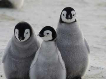 pinwinos - completa la imagen para ver a los pingüinos