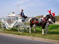 horse-drawn carriage for occasions