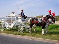 carruaje tirado por caballos para ocasiones