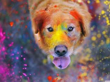 Le chien joyeux - Il nous montre la joie qu'un chien et les couleurs nous font vivre, amusez-vous avec la joie qu