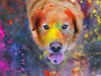 El perro alegre - Nos muestra la alegría que un perro y los colores nos trae a la vida, diviértete con la alegría q