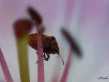 Intrus dans le jardin - Photo macro d'insecte.