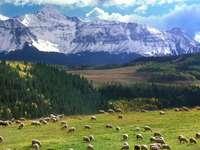 hegyek, juhok legeltetése