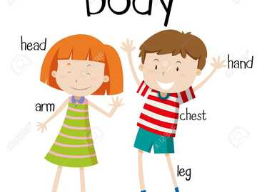 Parts of Body - solve the puzzle about to parts of body