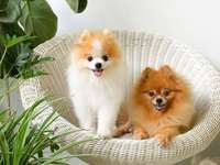 adorables cachorros