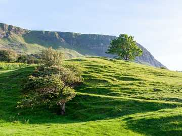 green grass field and trees on mountain - Field in County Antrim, Northern Ireland. County Antrim, UK