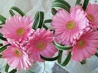 Samenstelling, roze, gerbera's