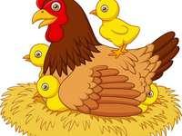 Kurczak z kurczaka