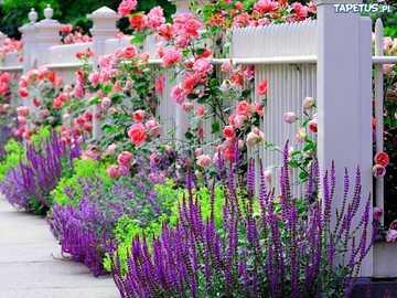 Rosen, Lavendel im Garten - m ... / ........................