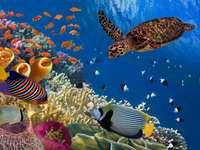 Recife de corais