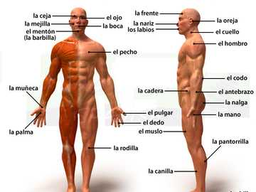 Il corpo umano e le sue parti - Metti insieme questo grande puzzle sul corpo umano e le sue parti.