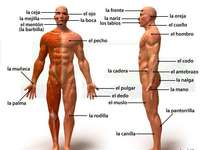The human body and its parts