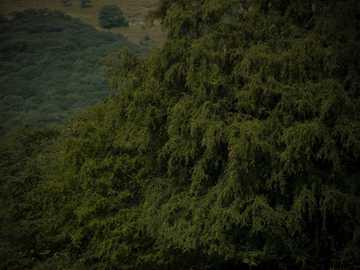 personnes debout sur le sable brun près des arbres verts pendant la journée - Un troupeau de cerfs joue à l'ombre des arbres qui entourent le parc national de Ranthambore e