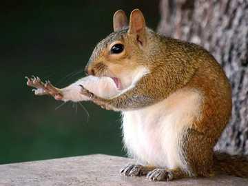 ne touche pas ma nourriture - restez sur place - ne touchez pas à ma nourriture