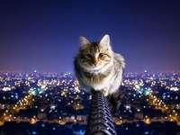 uwu cica