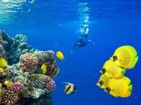 egito recife de coral