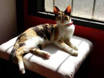 Puchula au soleil - J'ai lu le pet dans la fenêtre en train de bronzer