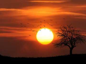 le coucher du soleil - paysage de coucher de soleil
