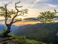 fa a sziklán, napkelte
