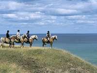 Excursie de călărie Skane pe coasta Suediei