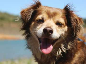 Happy Barrel - brown short-coated dog.