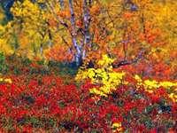 Őszi színek Finnországban