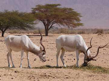 animaux du désert - m ...................