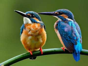 Jégmadár madarak - m ...................