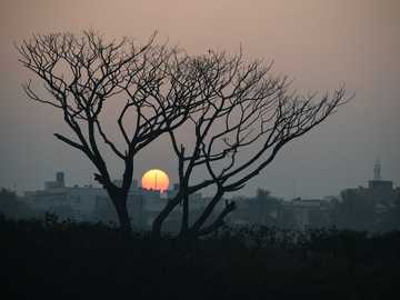 bare tree during golden hour - A glorious sunrise on a misty morning .