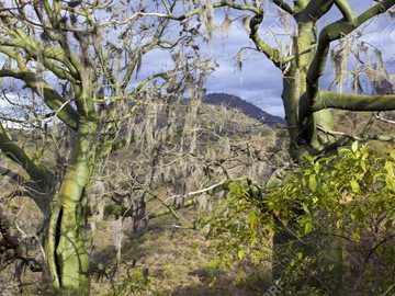 Forêt sèche - Forêt tropicale sèche de la région du Litoral ou de la Costa del Equateur