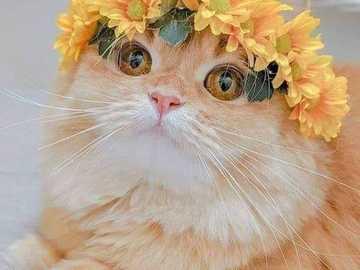 chaton ensoleillé - chaton ensoleillé avec une couronne ensoleillée