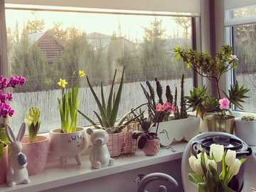 potted flowers on the windowsill - m ....................