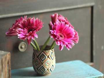 różowe gerbery - m......................