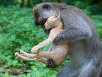 dierlijke vriendschap